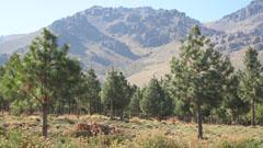 Forestacion El Llano