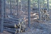 Productos del bosque
