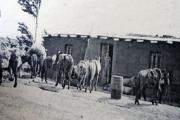 Comercio1930