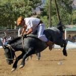 Fiesta Veranador 2014